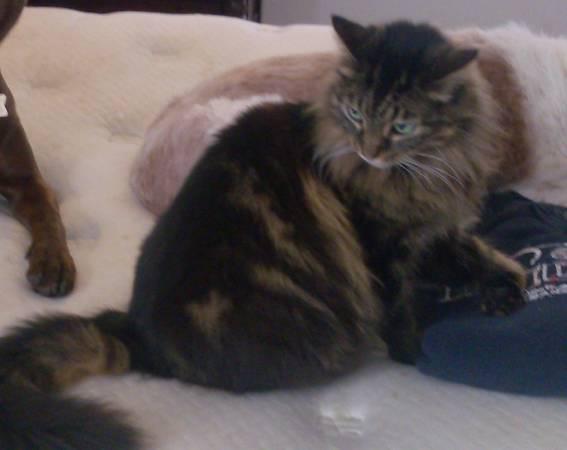 LOST MAINE CAT Naples15