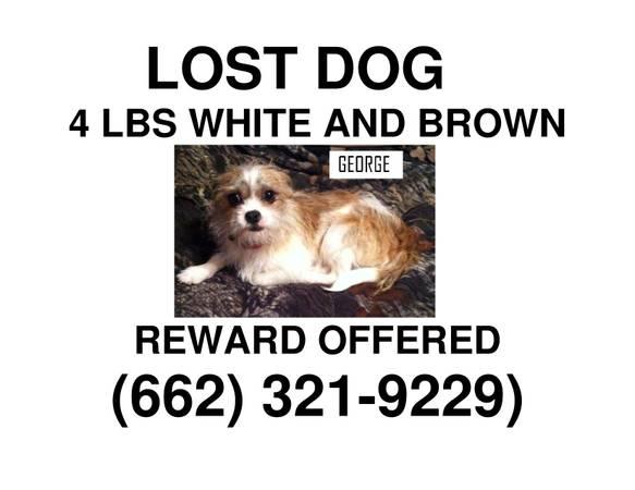 HELP US BRING HIM HOME. REWARD!!! Nmiss210