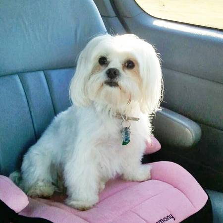 LOST DOG NORTH MISS Nmiss310