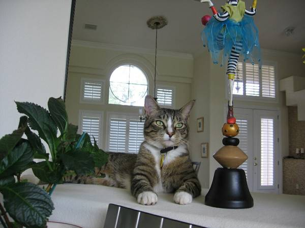 LOST CAT - ORLANDO Orl511