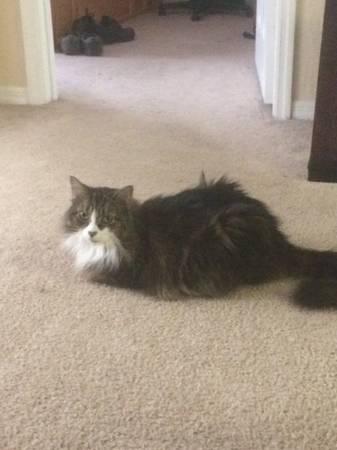 LOST CAT - VILLA VALENCIA APARTMENTS - ORLANDO Orl710