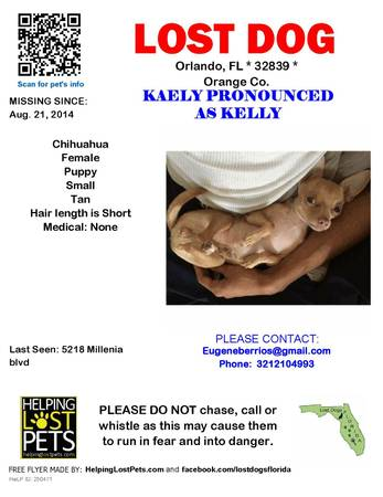 LOST CHIHUAHUA  Orl810