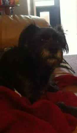LOST DOG - CURRY FORD Orl811