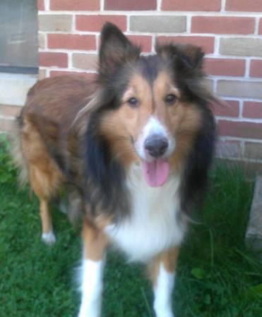 LOST DOG WITH REWARD Pa510
