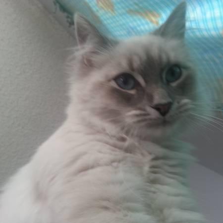 MISSING CAT  Reno110