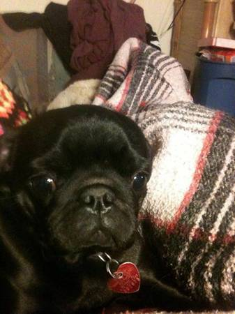 LOST PUG - SUN VALLEY Reno710