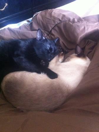 LOST BLACK CAT Tx610