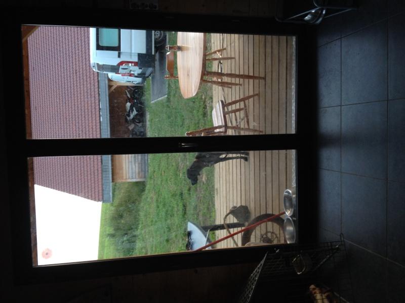 Proteger une porte vitrée des chiens Image13