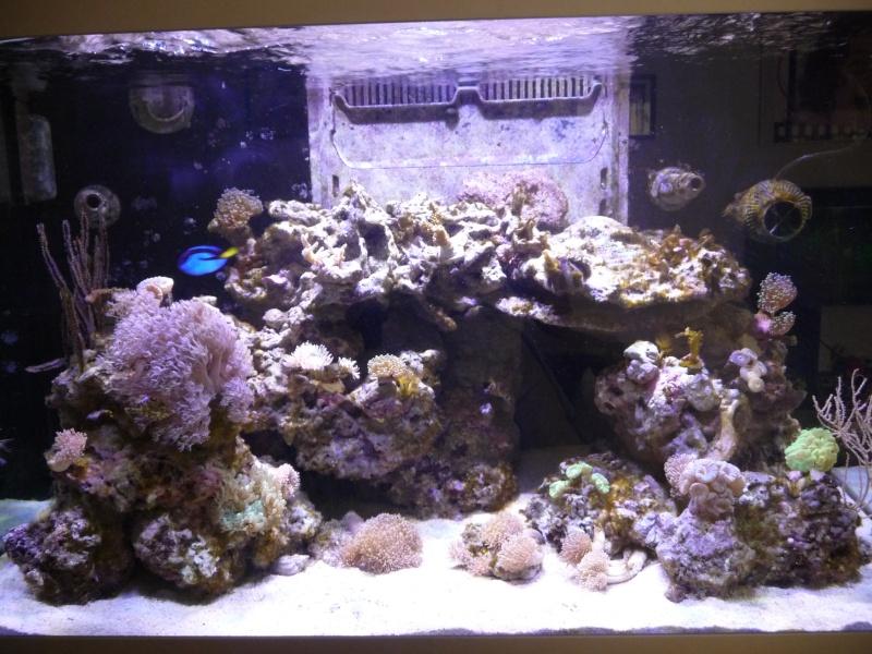 problemes d'algues Aquari11