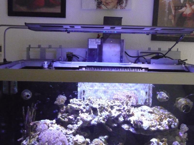 problemes d'algues Aquari12