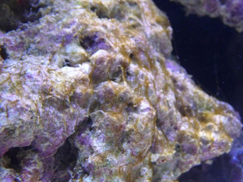 problemes d'algues P1000410