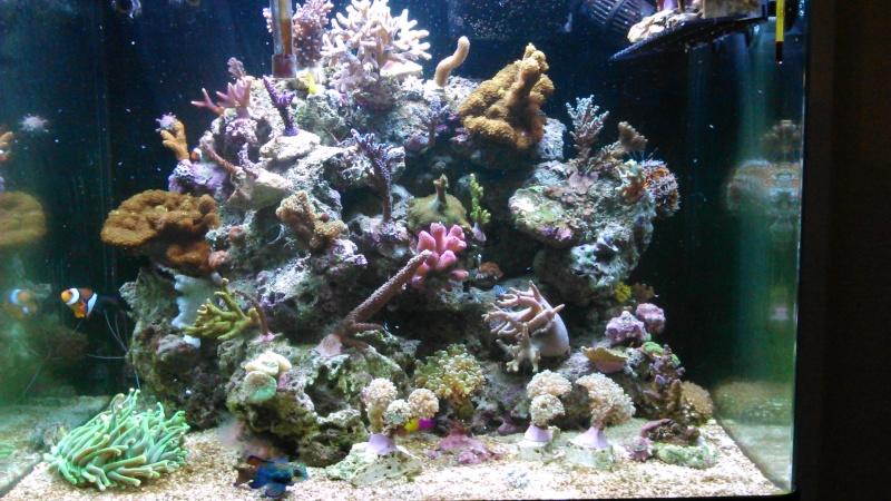 Red Sea 130 Dsc_0012