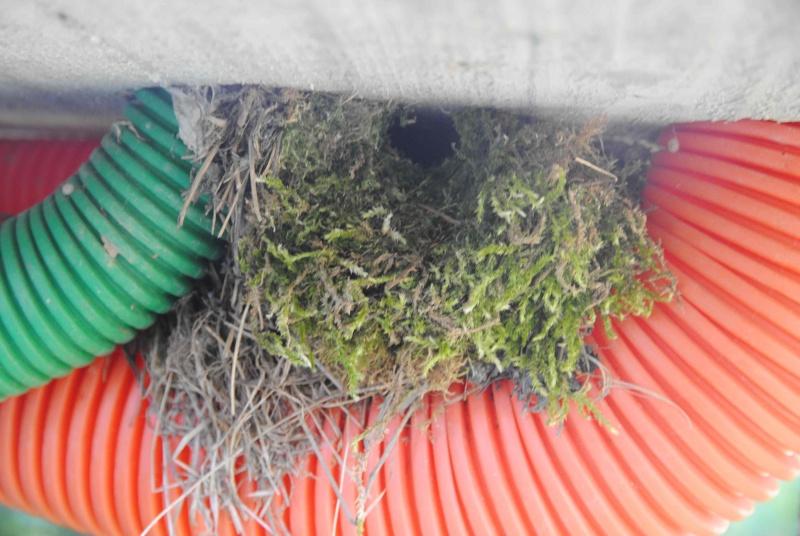A qui ce nid ? 2014-031