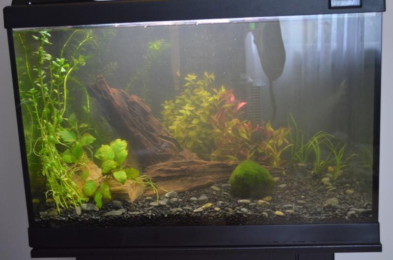 Identification de mes plantes Dsc_0627