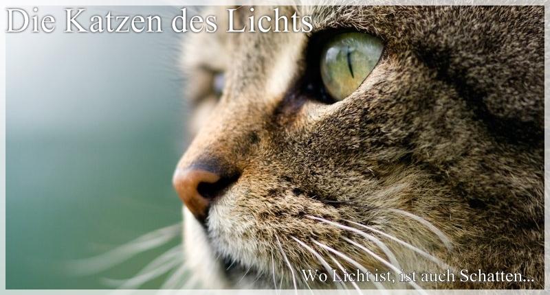 Die Katzen des Lichts