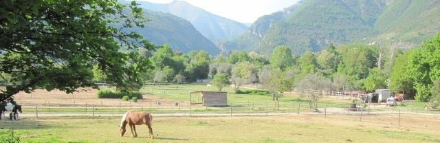 PRESENTATION LUCKY-HORSE Captur11