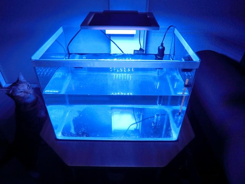 Nano de 40 litres de Brunob33 Cimg4511