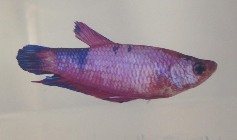 Mes sardines ! :P [MAJ] Fullsi21