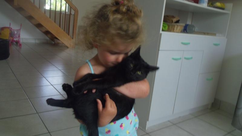 Jolicoeur, chaton type européen, noir née le 01/07/2014 Imgp6510
