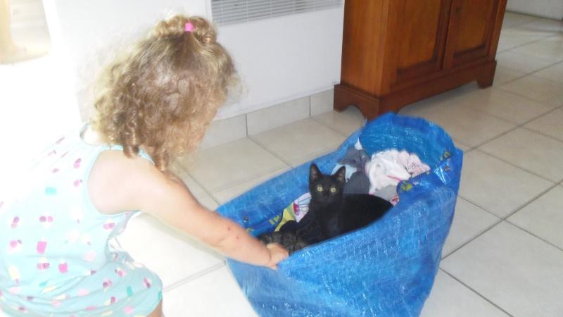 Jolicoeur, chaton type européen, noir née le 01/07/2014 Imgp6513