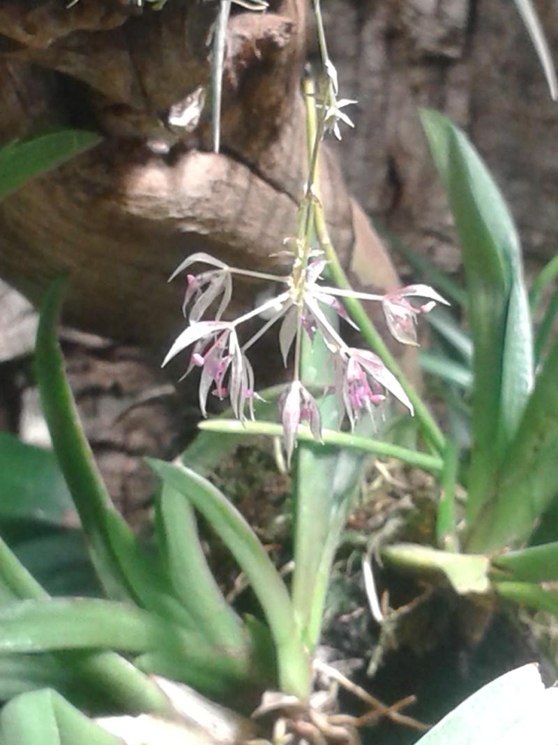 Miniatur-Orchideen 2. Teil 20140810