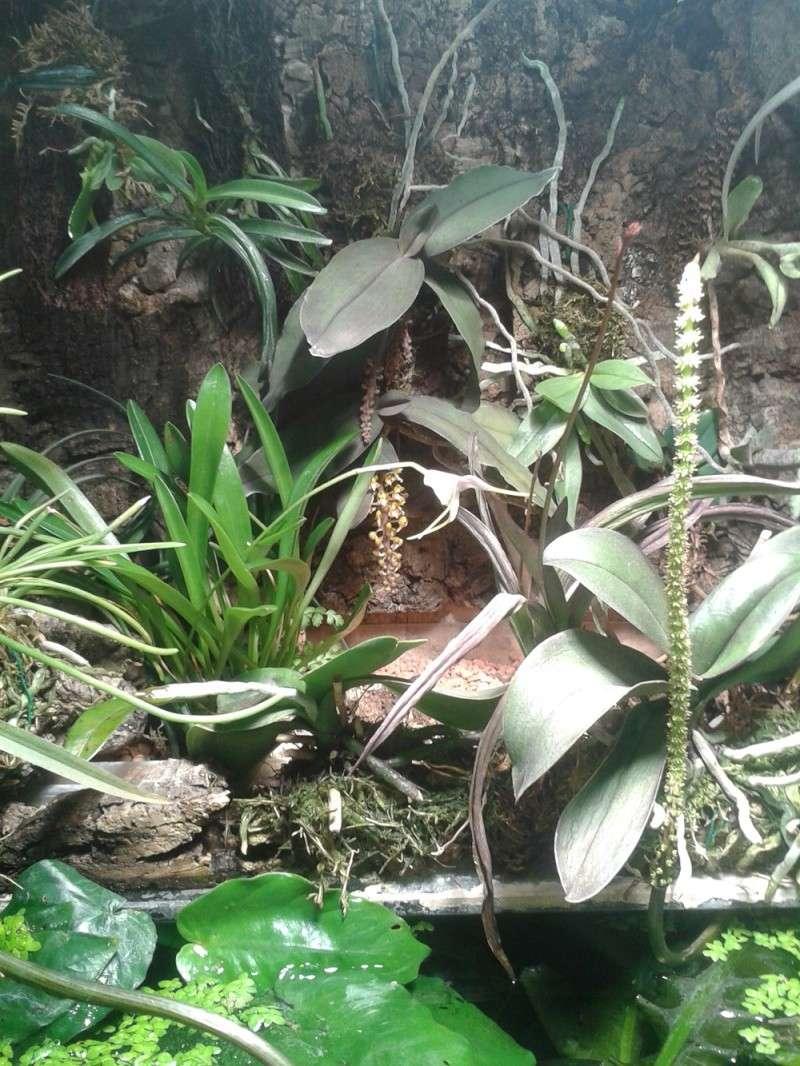 Miniatur-Orchideen 2. Teil 20140811