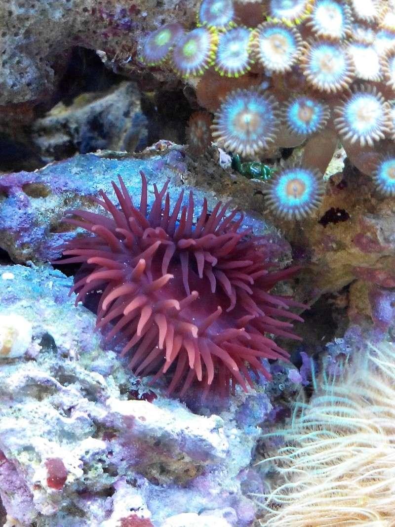 anemone de chez nous Img_2052