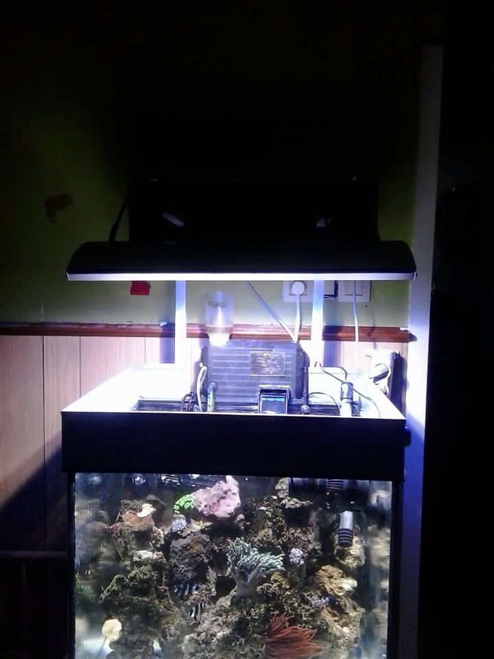nouveau aquarium  10348210