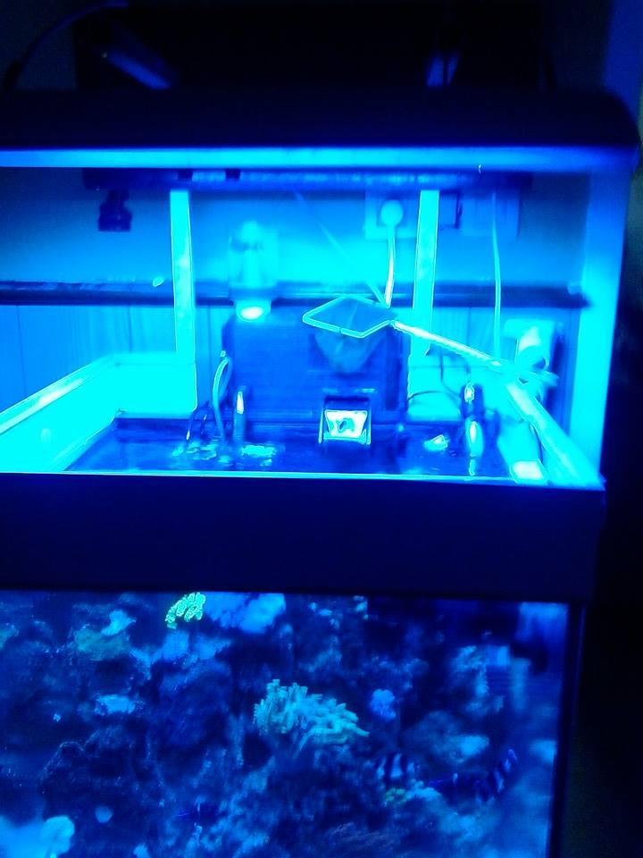 nouveau aquarium  10420710