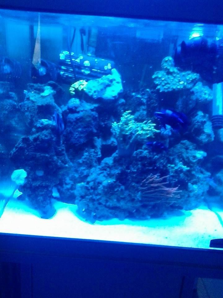 nouveau aquarium  10593010