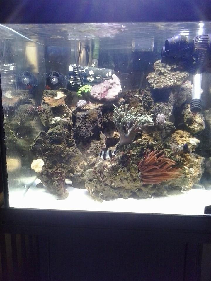 nouveau aquarium  10659310