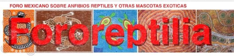 Foro Reptilia