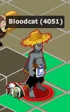 Candidature Bloodcat !  Bloodc10