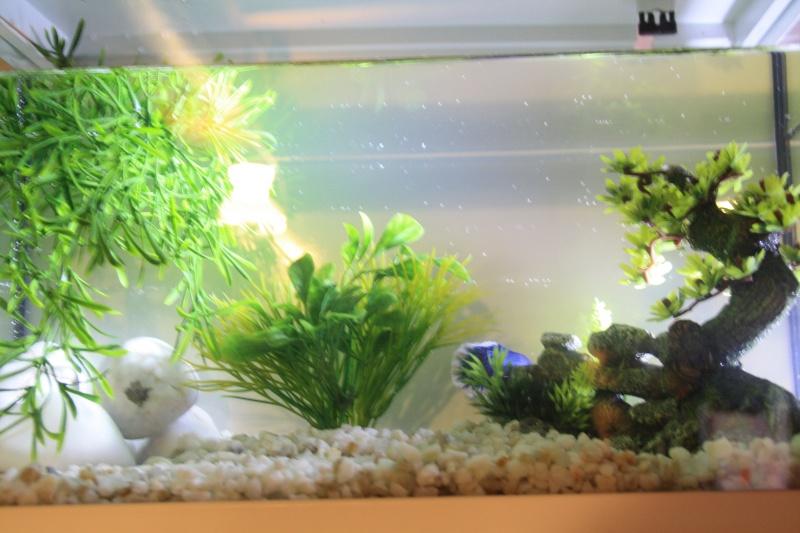 L aquarium de Poisson Img_2310