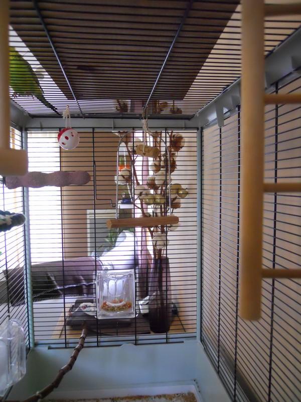 Votre opinion sur ce modèle de cage Ferplast Dscn4212