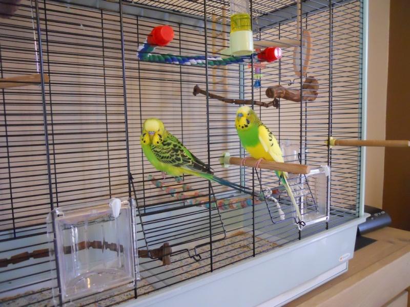 Votre opinion sur ce modèle de cage Ferplast Dscn4213