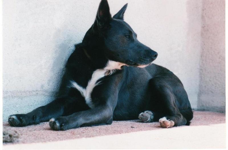 Un chien à la maison Lewis_10