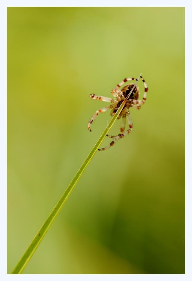 Les araignées Yquili10