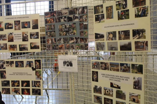 Salon du bien être animal - Mons (Belgique) - 25 OCTOBRE 2014 Img_9619