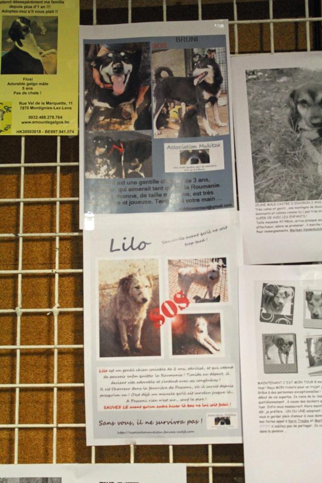 Salon du bien être animal - Mons (Belgique) - 25 OCTOBRE 2014 Img_9725