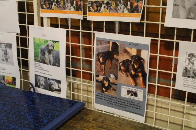 Salon du bien être animal - Mons (Belgique) - 25 OCTOBRE 2014 Img_9728