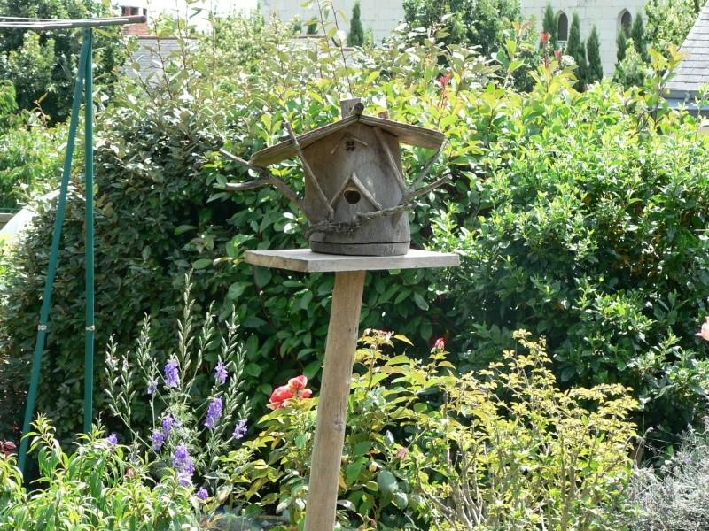 Photos frelons européens ayant élu domicile dans nichoir oiseaux P1310210