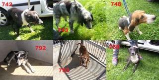Euthanasie programmée Vendredi 5 pour 7 chiens en Bretagne 10688110
