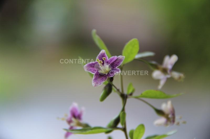 Quelques fleurs en souvenir du bon temps Img_6410