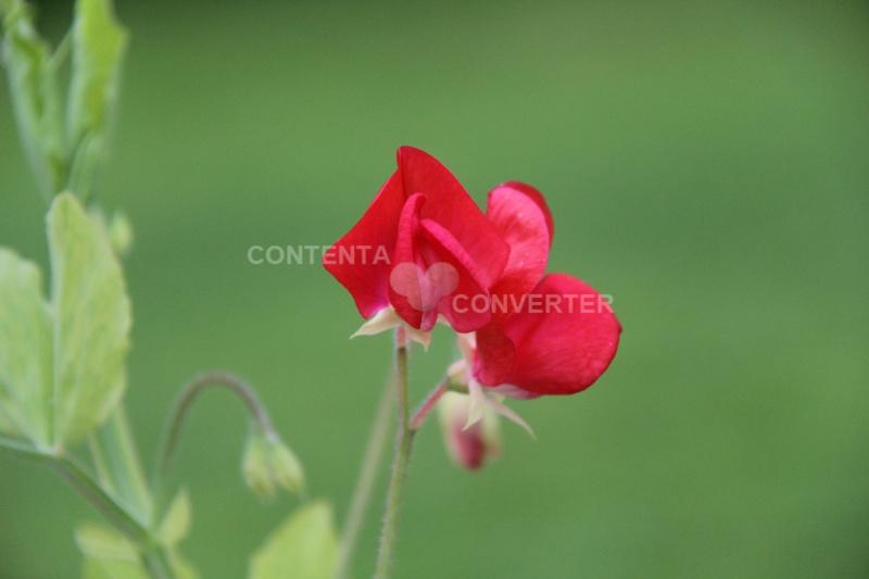 Quelques fleurs en souvenir du bon temps Img_6411