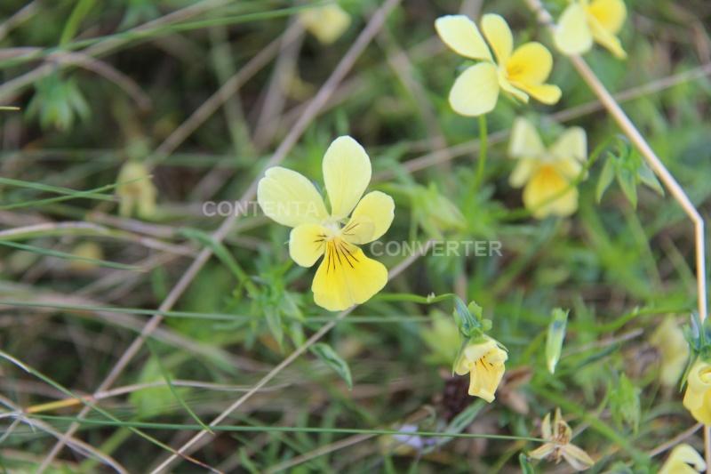 Quelques fleurs en souvenir du bon temps Img_6510