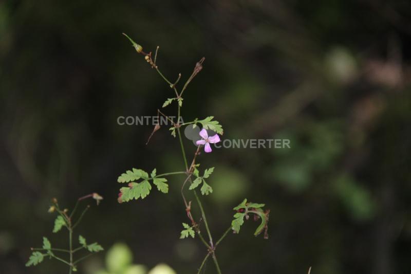Quelques fleurs en souvenir du bon temps Img_6511