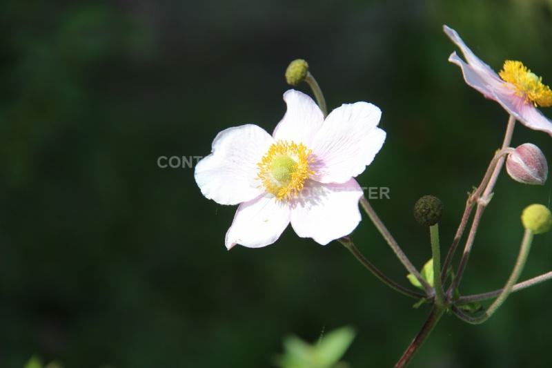 Quelques fleurs en souvenir du bon temps Img_6612