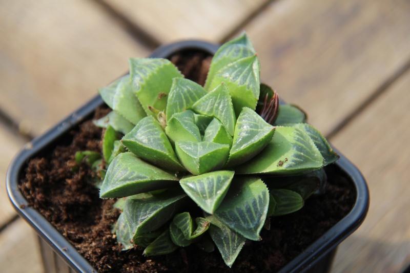 Photos nouvelles plantes :)  Img_6818