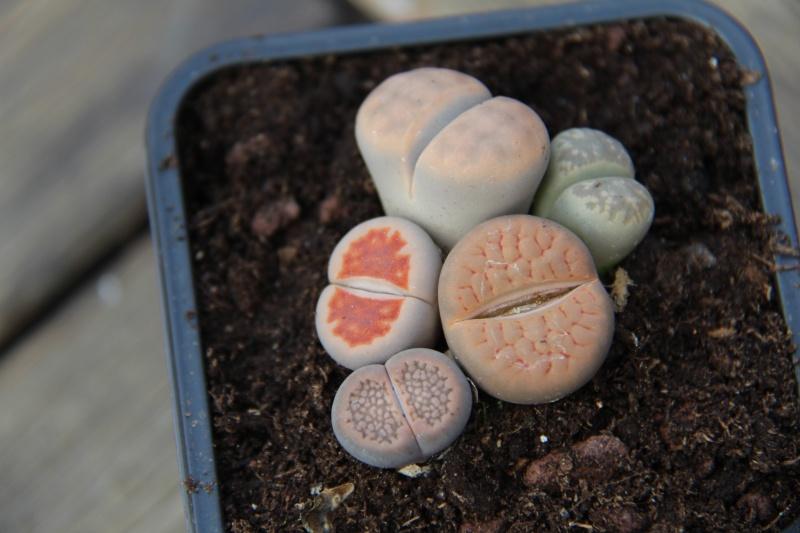 Photos nouvelles plantes :)  Img_6820